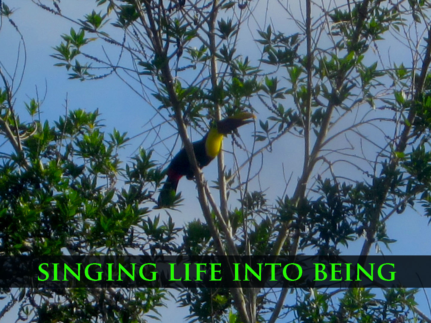 singing life into being